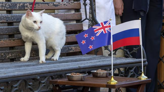 Achilles the cat prepares for role as World Cup 2018 psychic